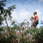 Tree Removal Arborists